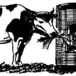A NURSERY FOR COWS