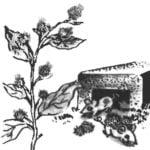 GRANDMA'S MOUSETRAP