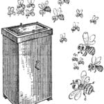 SAUNA FOR BEES