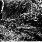 WINCH: PLOWMAN, KARCZEWSKI AND… MINESWEEPER